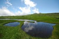 池塘 夏(横)2